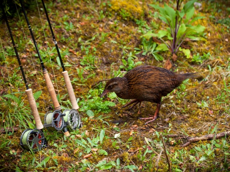 Weka checking out the rods