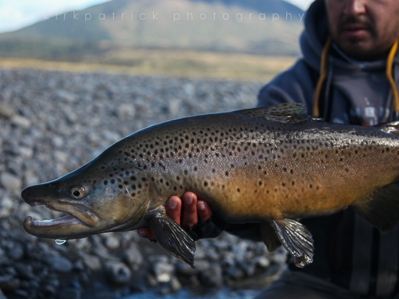 Angler showing beautiful big brown trout guided by Mike from Latitude Guiding